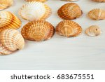 Small photo of Seashells (acanthocardia tubercolata) Group on a wooden surface.