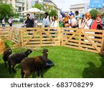 Small photo of PARIS, FRANCE - JUNE 4, 2017 - Visitors admiring sheeps at BiodiversiTerre event (created by Gad Weil) showing relationship of mankind with nature in today's society. Triumph Arch at background.