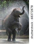 Elephant Of Thailand  Animals ...