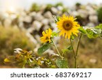 yellow flowers and sunflowers | Shutterstock . vector #683769217