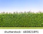 conifer hedge background | Shutterstock . vector #683821891