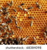 honey cells and working bees   Shutterstock . vector #68384098