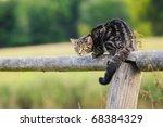 Cat Observes Tensely A Dog