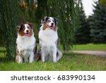 two australian shepherd dogs in ... | Shutterstock . vector #683990134