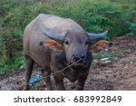 buffalo thailand   Shutterstock . vector #683992849