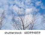 dead trees perennial with... | Shutterstock . vector #683994859