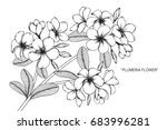plumeria flowers drawing and... | Shutterstock .eps vector #683996281