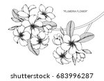 Plumeria Flowers Drawing And...