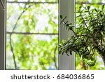 Houseplant Near Window Of...