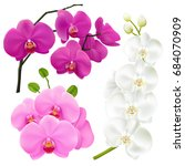 Orchid Branches With Colorful...