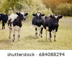 three young black and white...   Shutterstock . vector #684088294