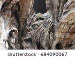 olive tree   Shutterstock . vector #684090067