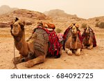 Three Camels Sitting On The...