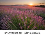 meadow of lavender. nature... | Shutterstock . vector #684138631