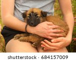 black mask puppy on human lap... | Shutterstock . vector #684157009