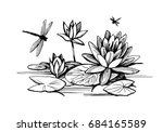 flowers of water lilies and... | Shutterstock . vector #684165589