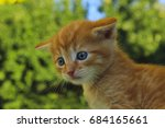 kitten. cute kitten in the park.... | Shutterstock . vector #684165661