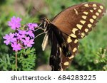 Butterfly Stopping To Smell Th...