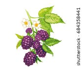 branches of blackberry with... | Shutterstock . vector #684358441