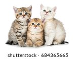 Stock photo three tabby kitten 684365665