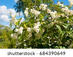 beautiful white jasmine flower... | Shutterstock . vector #684390649