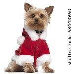Yorkshire Terrier Wearing Sant...