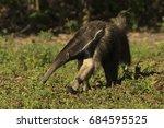 giant anteater  myrmecophaga... | Shutterstock . vector #684595525