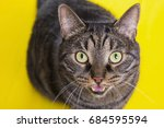 cat with open mouth on a yellow ... | Shutterstock . vector #684595594