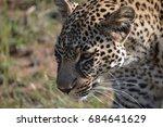 Leopard Close Up In Maasai Mar...