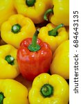 Small photo of A red capsicum in a group of yellow capsicums