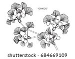 ginkgo leaves drawing and... | Shutterstock .eps vector #684669109
