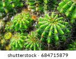 Green Cactus And Spike