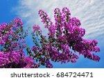 Bougainvillea Flowers Against...