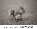 Squirrel On The Ground With...