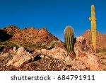 a species of barrel cactus... | Shutterstock . vector #684791911