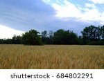 wheat field on a background of... | Shutterstock . vector #684802291
