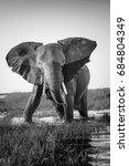 elephant half wet in sunset... | Shutterstock . vector #684804349