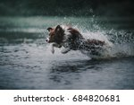 Stock photo border collie runs in the water 684820681