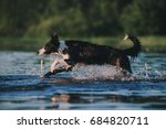 border collie runs in the water | Shutterstock . vector #684820711