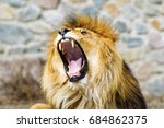 beautiful mighty lion | Shutterstock . vector #684862375