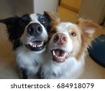 Two Dogs Smile