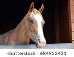 The Horse In The Window