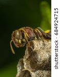 Small photo of Macro of Hymenoptera is a large order of insects, comprising the sawflies, wasps, bees, and ants yellow and black color close up on the nest in nature