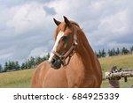 Stock photo head horse 684925339