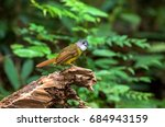 Small photo of Yellow-bellied Bulbul (Alophoixus phaeocephalus) standing on a stump in nature with green background.