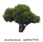 die cut green big tree isolate... | Shutterstock . vector #684967945