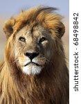 Lion king of the African savannah, Serengeti, Tanzania - stock photo