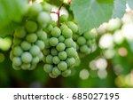unripe grapes | Shutterstock . vector #685027195