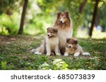 one big fluffy dog with red and ... | Shutterstock . vector #685073839