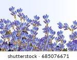 Lavender On White Background....